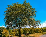 Красивый природный парк Rheinaue стоковые изображения rf