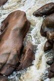 Красивый пропуская поток воды Стоковые Изображения
