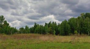 Красивый простый горизонт неба в поле стоковое фото