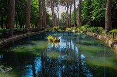 Красивый пруд озера в зеленом лесе стоковые фото