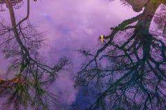 Красивый пруд на деревне Oshino Hakkai в Японии Стоковые Изображения