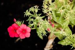 Красивый пук красного сезона цветка лепестка весной на ботаническом саде Стоковое фото RF