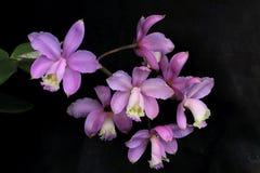 Красивый пук цветка орхидеи сирени стоковое изображение rf
