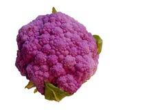 Красивый пурпурный овощ цветных капуст стоковое фото rf