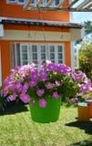 Красивый пурпур цветка Стоковая Фотография