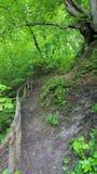 Красивый путь в природе Стоковое Изображение RF