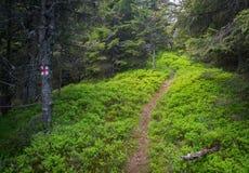 Красивый путь (отмечена тропа) Стоковые Изображения RF