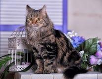 Красивый пушистый коричневый кот Стоковое Изображение