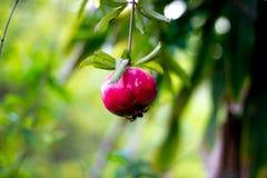 Красивый плодоовощ Стоковое фото RF