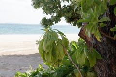 Красивый пляж с заводами на тропическом острове Бали, Индонезии Стоковые Изображения RF