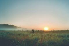 Красивый рассвет в полях Стоковые Изображения RF