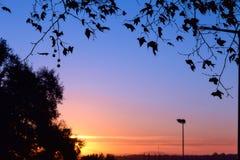 Красивый рассвет с силуэтом ветви экзотического дерева Первые лучи солнца появляются в небо Силуэт ветви Стоковое Изображение RF