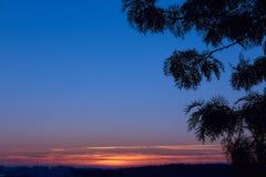 Красивый рассвет с силуэтом ветви экзотического дерева Первые лучи солнца появляются в небо Силуэт ветви Стоковое Изображение