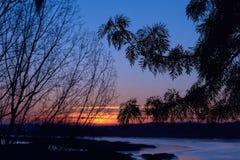 Красивый рассвет с силуэтом ветви экзотического дерева Первые лучи солнца появляются в небо Силуэт ветви Стоковые Изображения