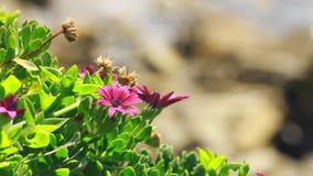 Красивый расти цветков близко к морю видеоматериал