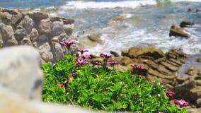 Красивый расти цветков близко к морю акции видеоматериалы