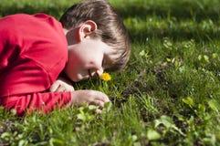 Красивый ребенок выбирает цветки на луге зеленого цвета лета Стоковое Изображение