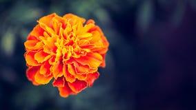 Красивый ретро покрашенный цветок Стоковая Фотография