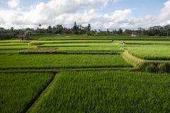 Красивый рис fields, Бали, Индонезия Стоковое Изображение RF