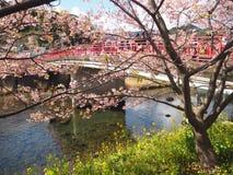 Красивый розовый вишневый цвет в Японии стоковая фотография