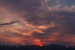 Красивый розовый заход солнца над лесом Стоковая Фотография