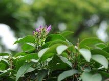Красивый розовый цветок в парке Стоковая Фотография