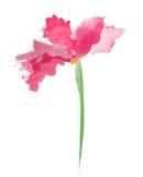 Красивый розовый цветок, картина акварели Стоковое Изображение RF