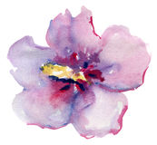 Красивый розовый цветок, картина акварели Стоковое фото RF
