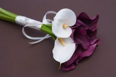 Красивый розовый цветок лилии изолированный на белой предпосылке конец вверх Стоковое Изображение