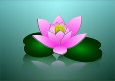 Красивый розовый цветок лотоса с отражением в воде Стоковые Изображения