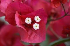 Красивый розовый цветок от крупного плана Стоковые Фото