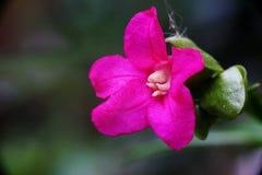Красивый розовый цветок, Стоковое фото RF
