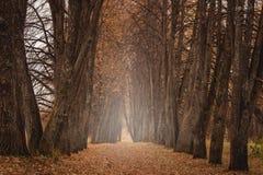Красивый романтичный переулок в парке с красочными деревьями и туманом Предпосылка осени естественная стоковые фото