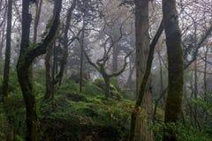 Красивый романтичный fairy лес в тумане Стоковые Изображения RF