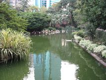 Красивый рыбный пруд в парке Kowloon, Гонконге стоковое изображение