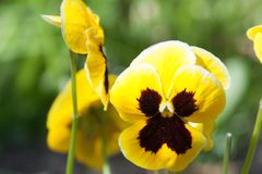 Красивый сад альта весной стоковые изображения
