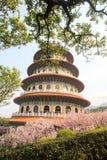 Красивый сад Сакуры в Тайбэе, Тайване Стоковая Фотография