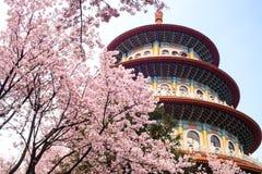 Красивый сад Сакуры в Тайбэе, Тайване Стоковые Фотографии RF