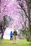 Красивый сад Сакуры Стоковая Фотография
