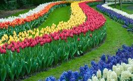 Красивый сад тюльпана весной Стоковая Фотография