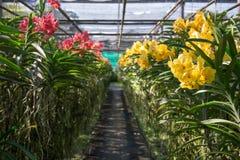 Красивый сад стоковое фото rf