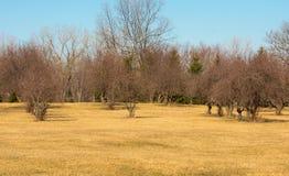 Красивый сад Стоковые Фото