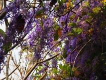 Красивый сад outdoors Стоковые Изображения RF