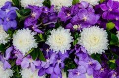 Красивый свежего цветок Розы и орхидеи розовый Стоковые Фото