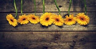 Красивый свежий желтый цвет Gerbers весны на старом винтажном деревянном Tabl Стоковые Изображения RF