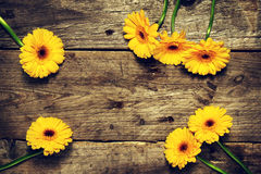 Красивый свежий желтый цвет Gerbers весны на старом винтажном деревянном Tabl Стоковые Фото