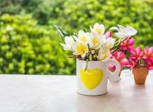 Красивый свежий молодой мини белые и желтые plumeria цветка или f Стоковое Изображение RF