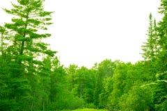Красивый северный лес Мичигана Стоковое Изображение RF