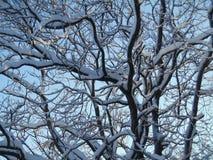 Красивый сезон зимы Стоковое Изображение