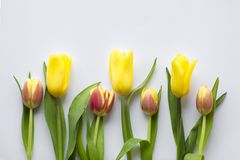 Красивый сезон цветка весной стоковое фото rf